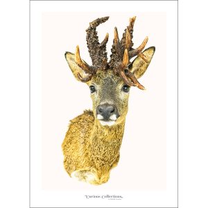 CC_animal_01 Deer