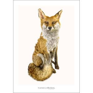 CC_animal_02 Fox