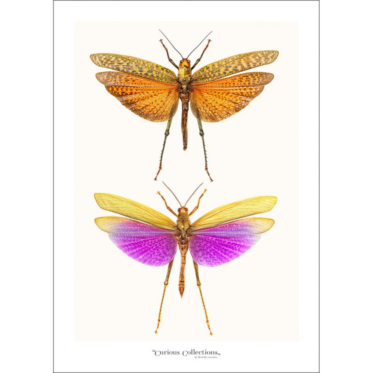 CC_insect_01
