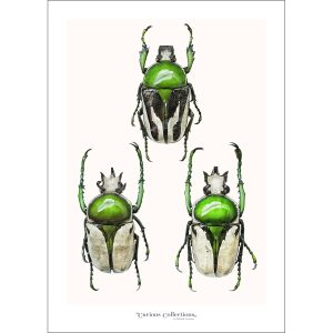 CC_insect_04 Beatles