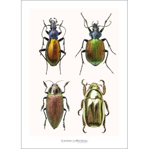 CC_insect_09 Beatles