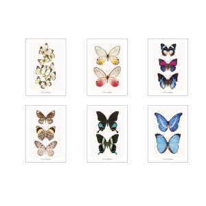 Set of greeting cards CC_set_butterflies