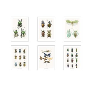 Set of greeting cards CC_set_insects