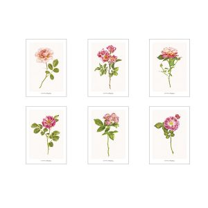 Set of greeting cards CC_set_roses