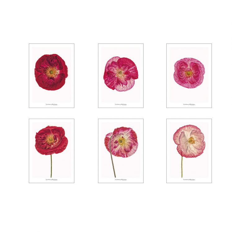 Set of artworks CC_set_poppies
