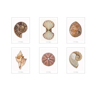 Set of greeting cards CC_set_shells