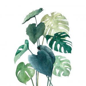 Art Print Botanical 04