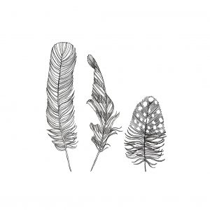 Postcard Feathers