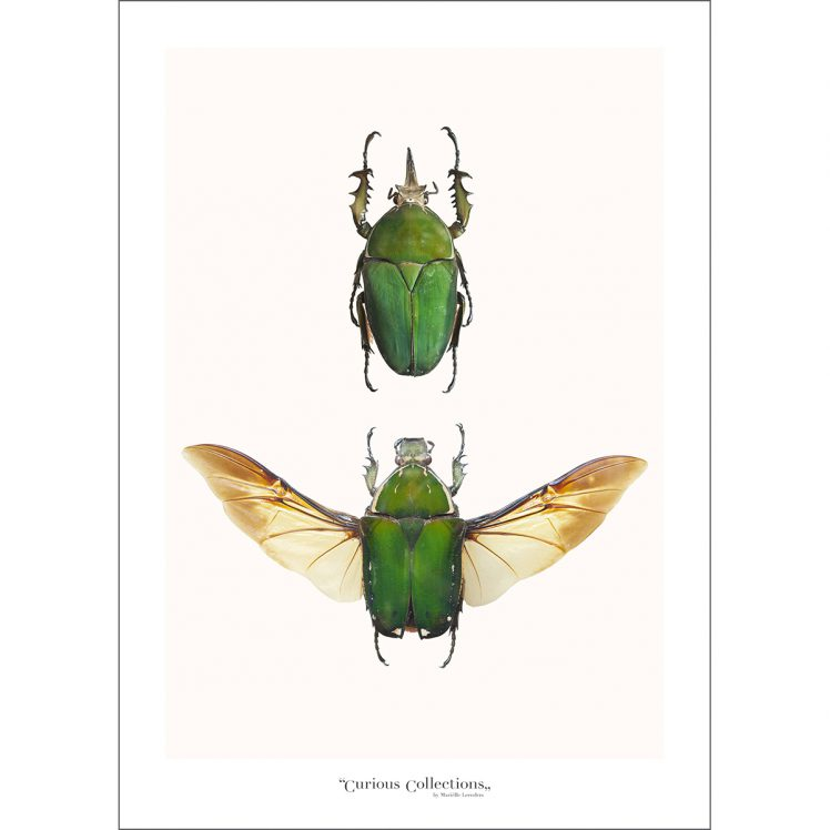 CC_insect_02 Beatle
