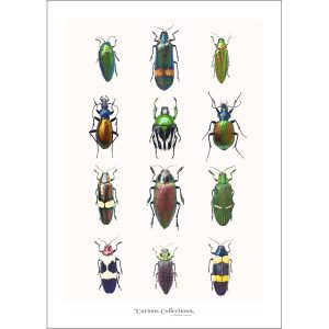 CC_insect_03 Beatles